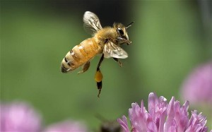 If you think honeybees only produce honey, think again!